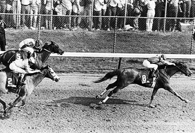 Genuine Risk, Kentucky Derby winner.  THE filly!