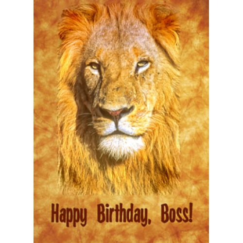 f50ab96d6a843357c7caf7009c2d0c99 happy birthday, boss lion wish from the quick to see selective