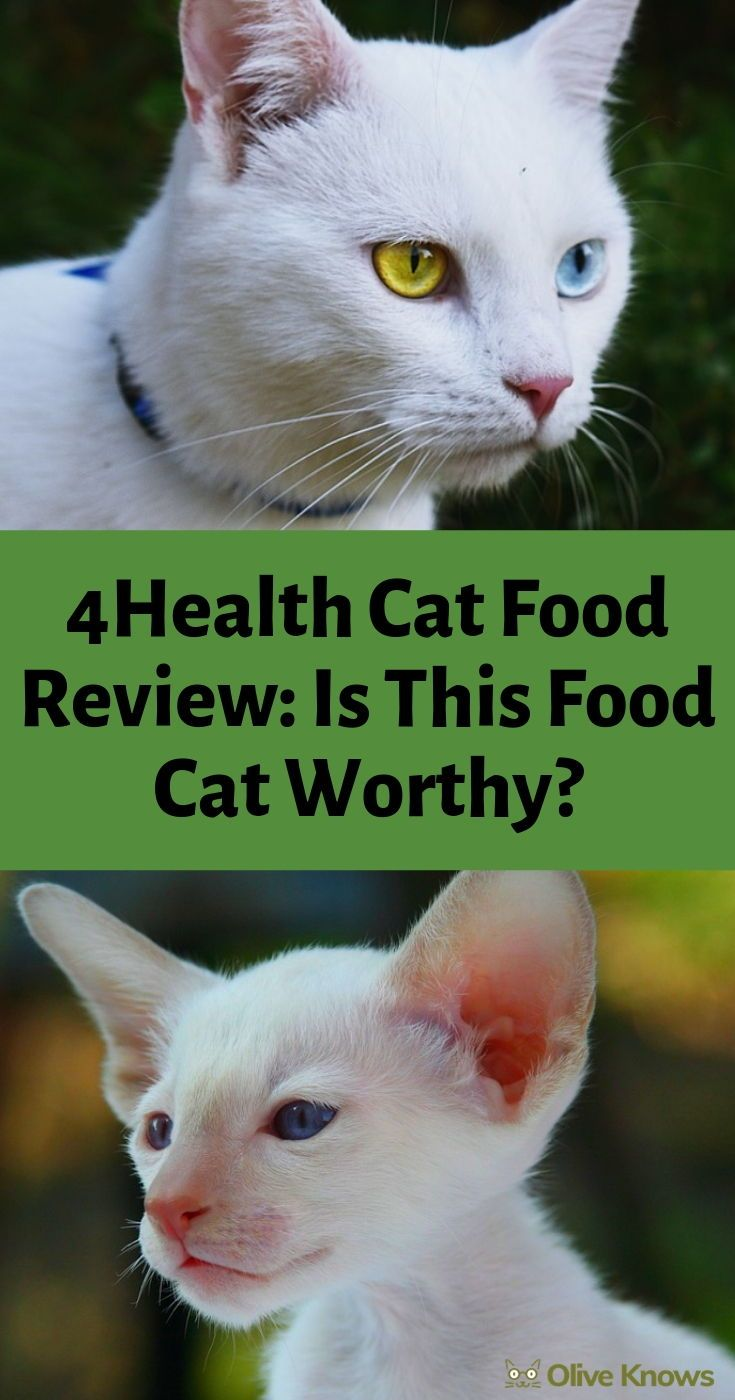4Health Cat Food Review Is This Food Cat Worthy? Cat