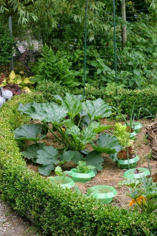 Le buis nain permet de structurer le jardin potager ou d for Structurer un jardin