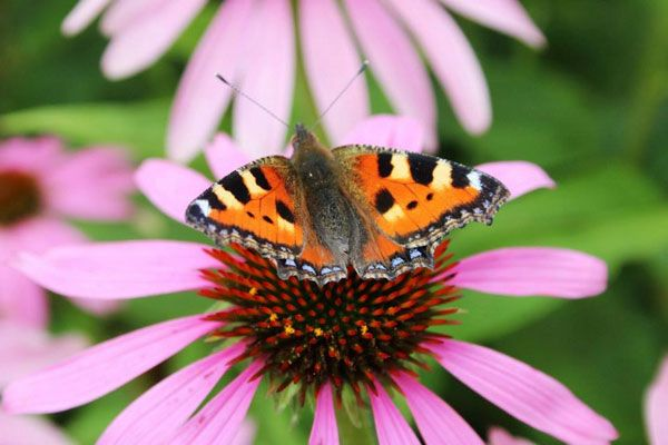Butterfly by Jo Dickson, Oxfordshire Cotswolds photographic competition 2014.