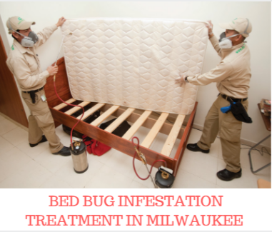 Affordable Bed Bug Exterminators Offers The Best Bed Bug Infestation  Treatment In Milwaukee. Our Treatments