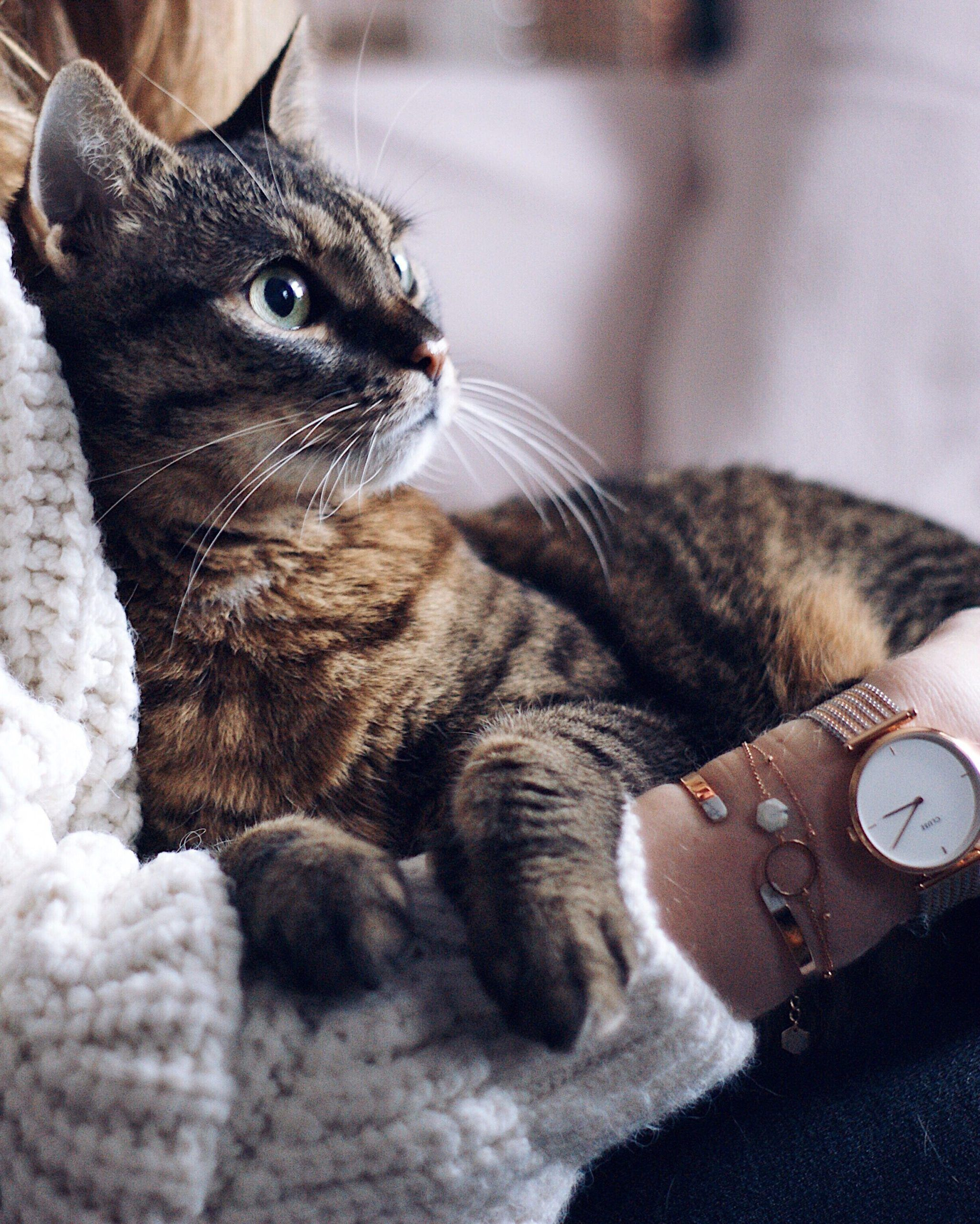 Catgram Cat Cozy Cuddling Time With Cat Cluse Triumph Clock