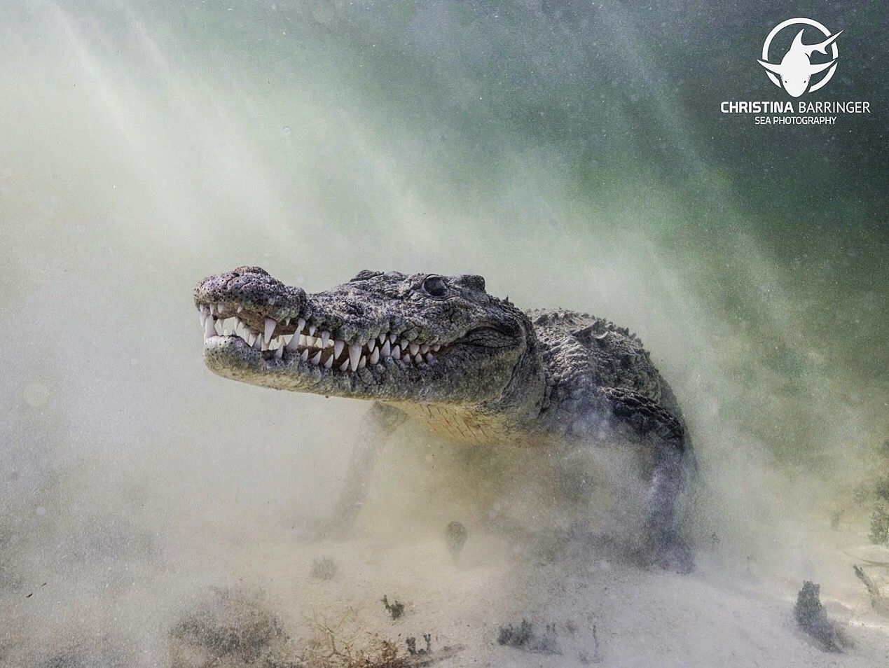 Image result for crocodile in mist