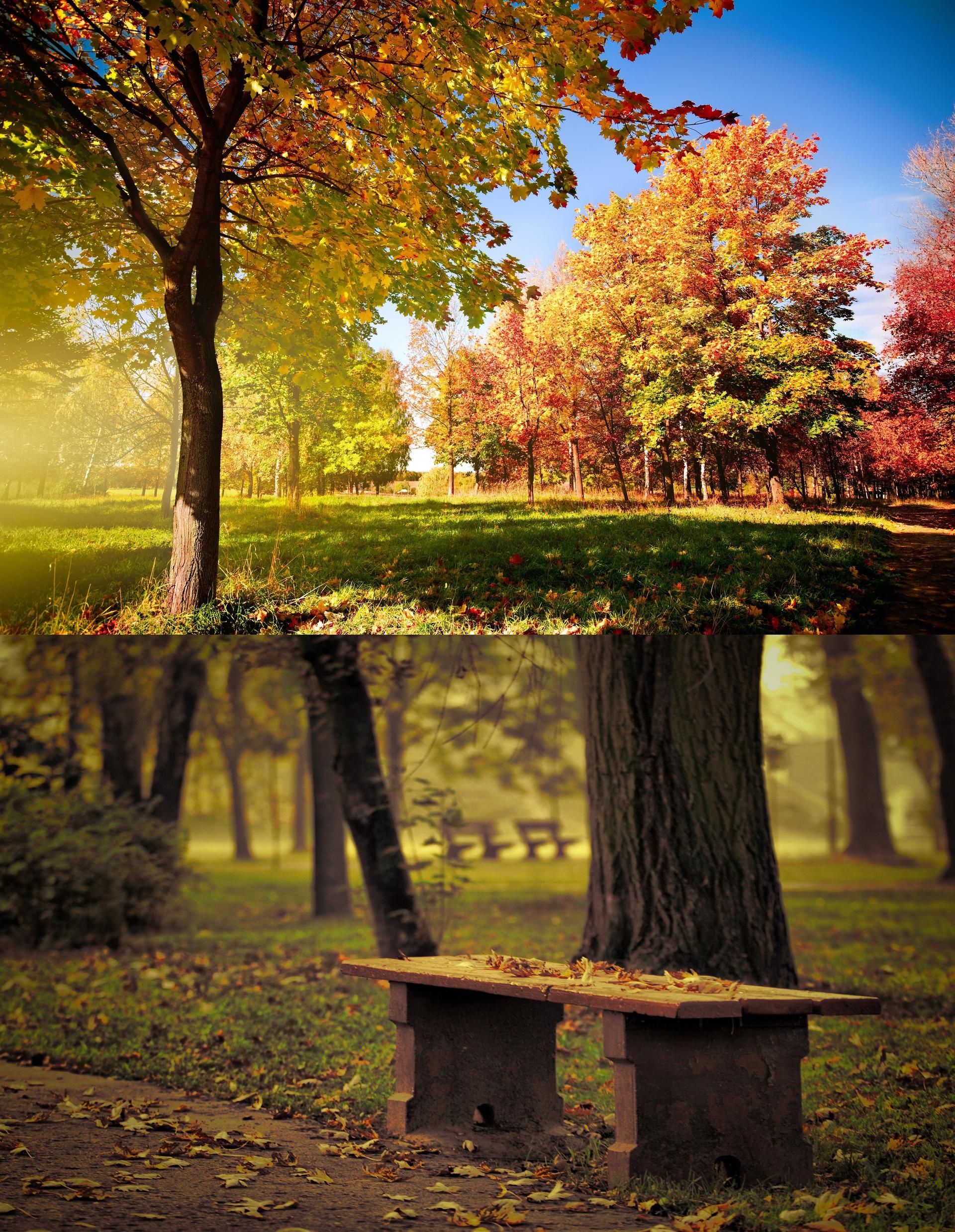 Bench, park, fallen leaves, autumn trees, the effect of the focus, blurring