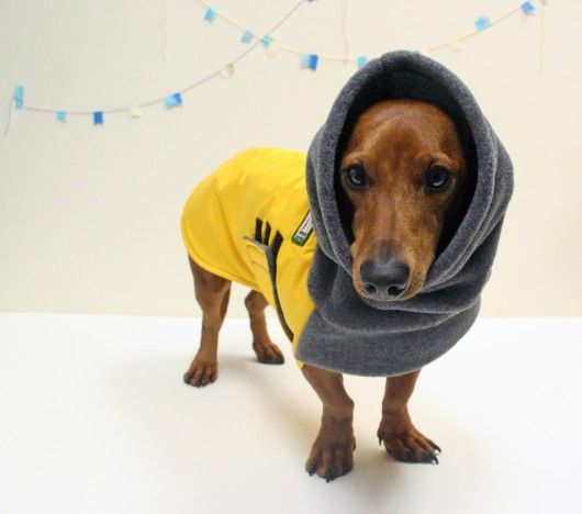 Blogger Ordered From Voyagers K9 Apparel For Her Dachshund