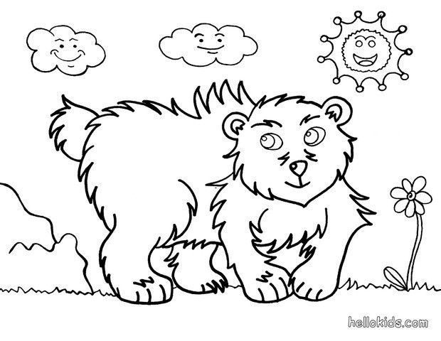 Bear Coloring Page More Wild Animals Sheets On Hellokids