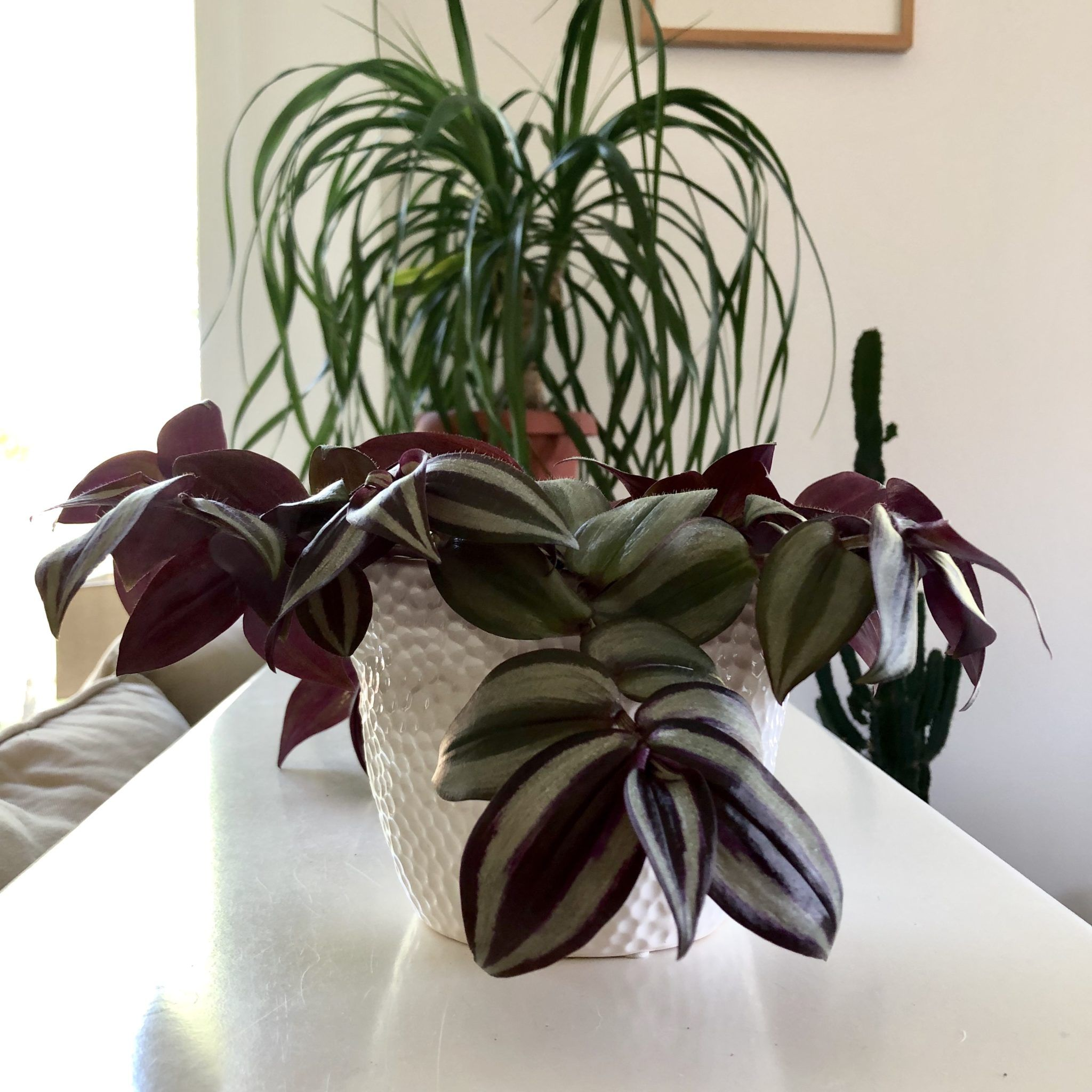 10 Best NonToxic House Plants That are Safe For Children Cats  Dogs  My Tasteful Space