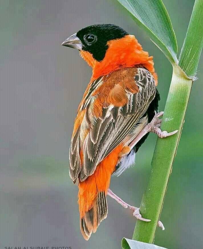 Pin von Sorokin auf BIRDS Exotische vögel Tiere wild