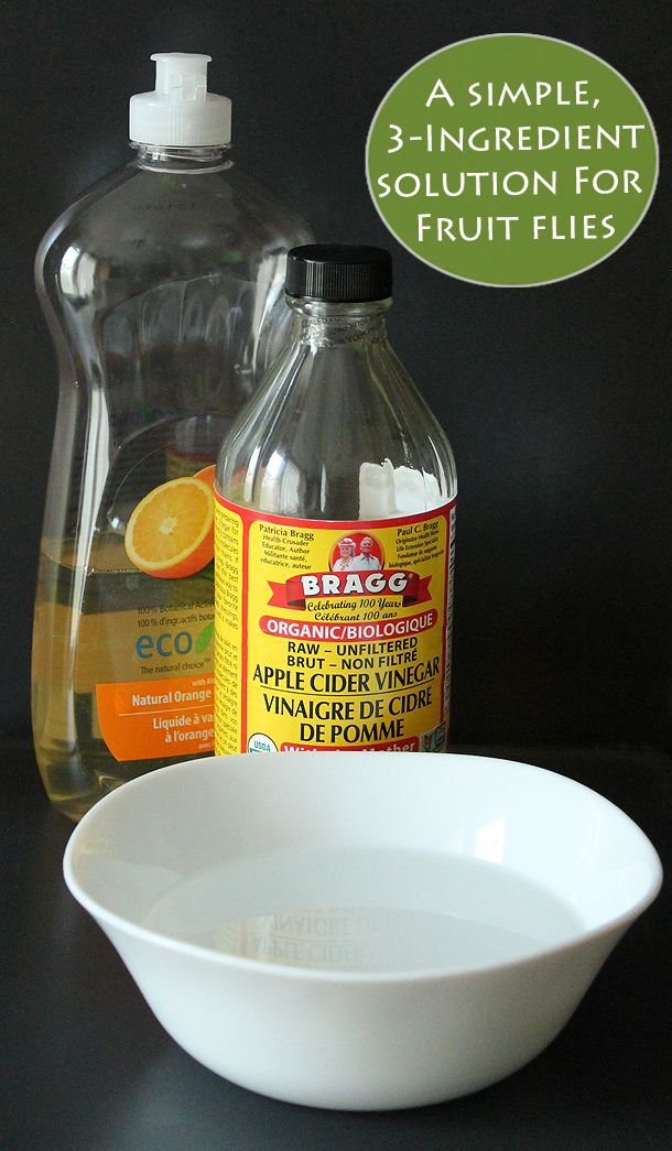 Fruit Flies: How To Get Rid Of Them (& Keep Them Away