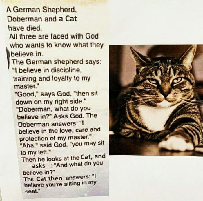 Cats are God