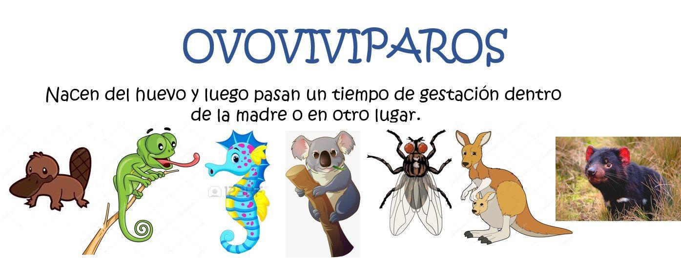 Animales Según Su Nacimiento Ovoviviparos Education Fictional Characters Biology
