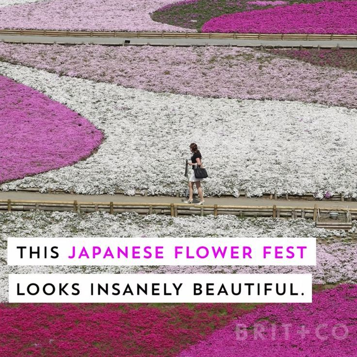 You Ve Got To Check Out This Flower Installation Irl Places To Travel Japan Travel Travel Inspiration