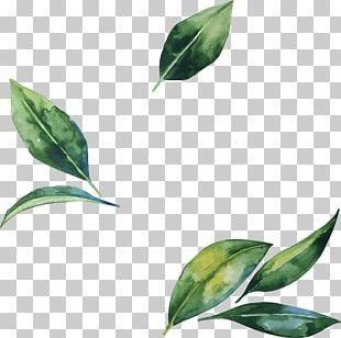 Ilustracion De Flor De Hoja Hojas De Acuarela Pintadas A Mano Hoja Verde Png Clipart Flower Illustration Watercolor Leaves Leaf Drawing