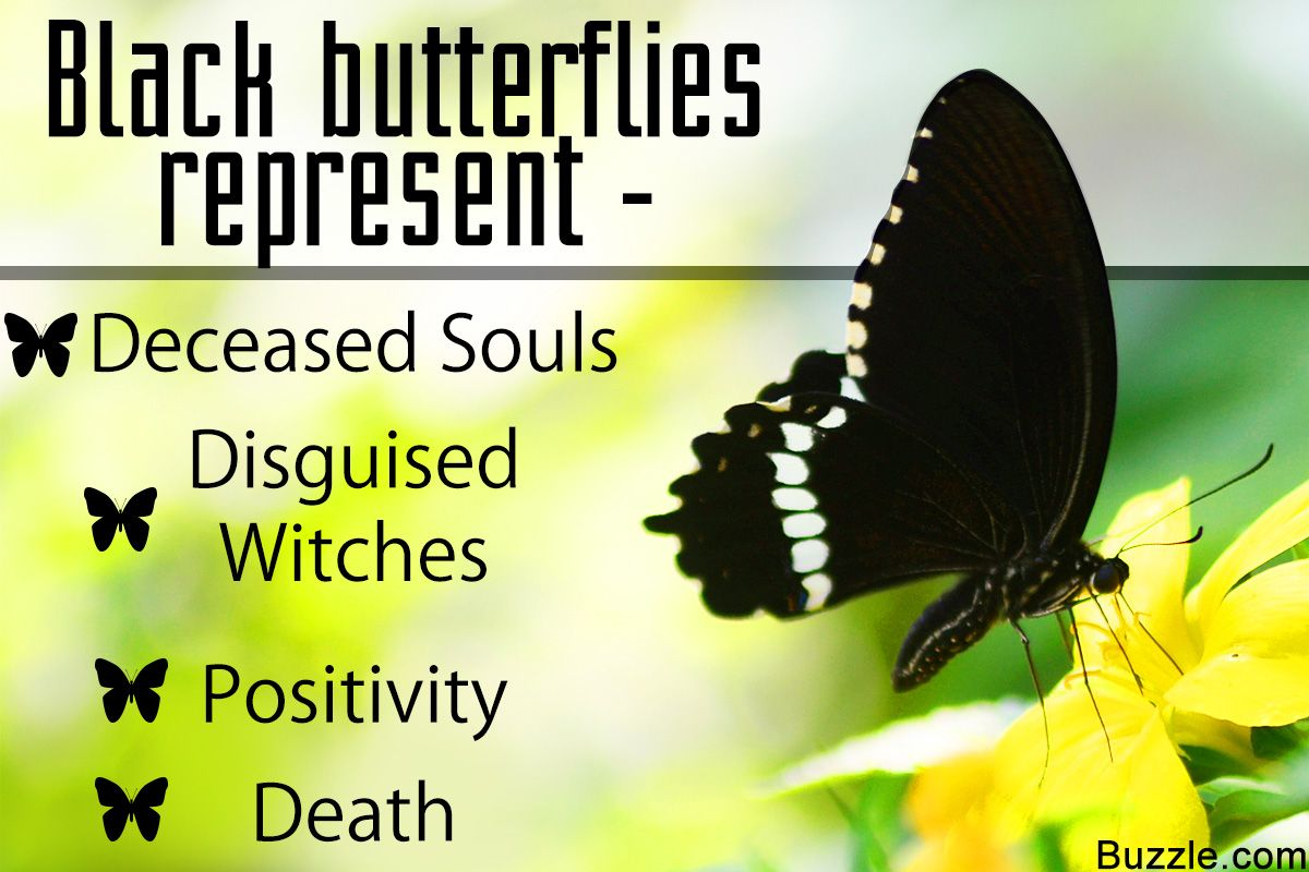 Get To Know The Symbolism And Meaning Of A Black Butterfly Butterfly Meaning Butterfly Symbolism Black Butterfly