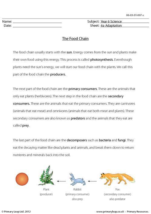 science worksheet the food chain for teachers food chain worksheet. Black Bedroom Furniture Sets. Home Design Ideas