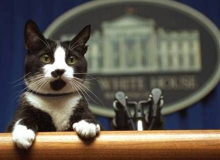 White house press funny animal pictures