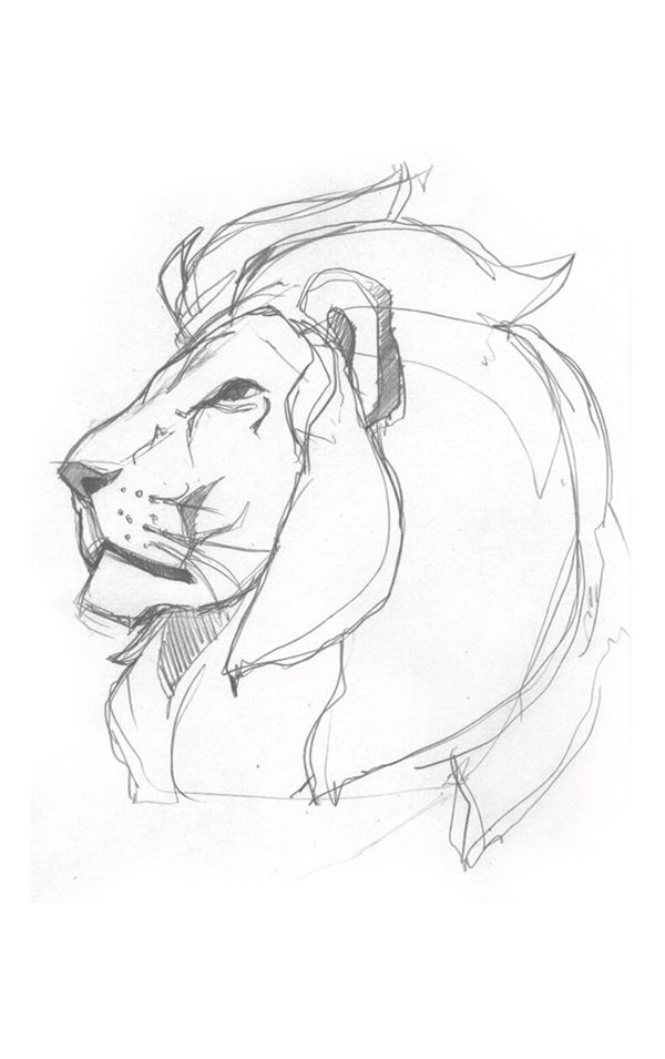 Pride (Lion Illustration)