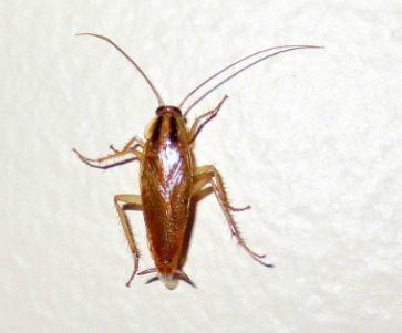 Pin On Best Roach Killers
