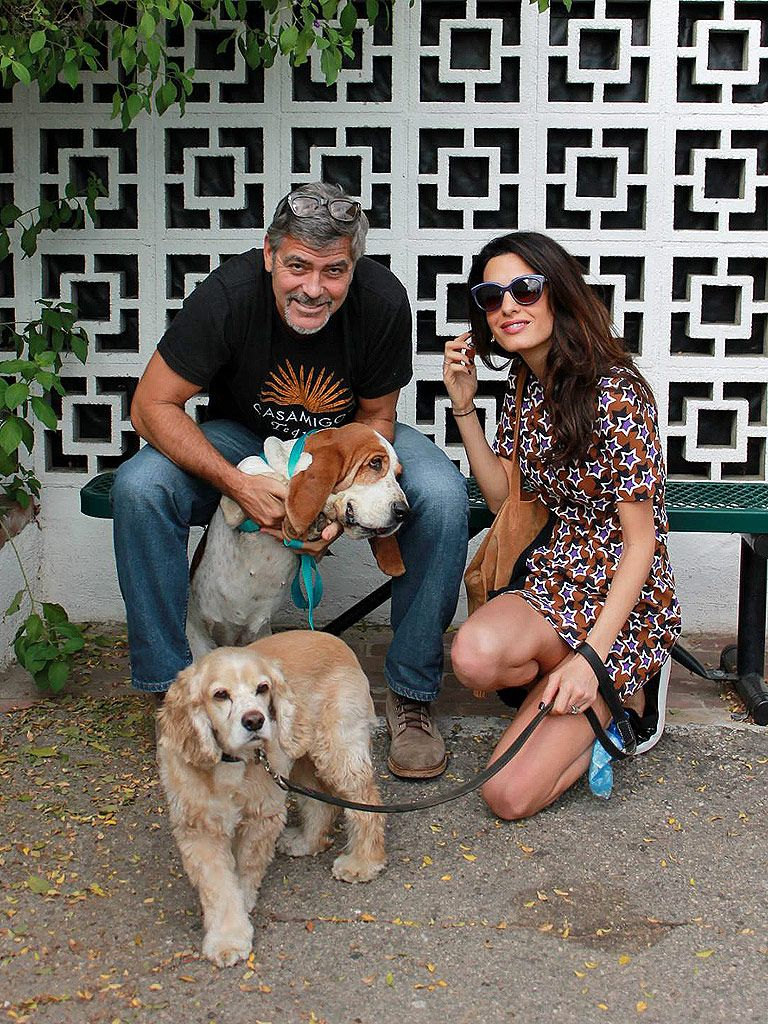 5 Things You Need To Know About George Amal S New Rescue Dog Millie Celebrity Dogs Dog Adoption Amal Clooney