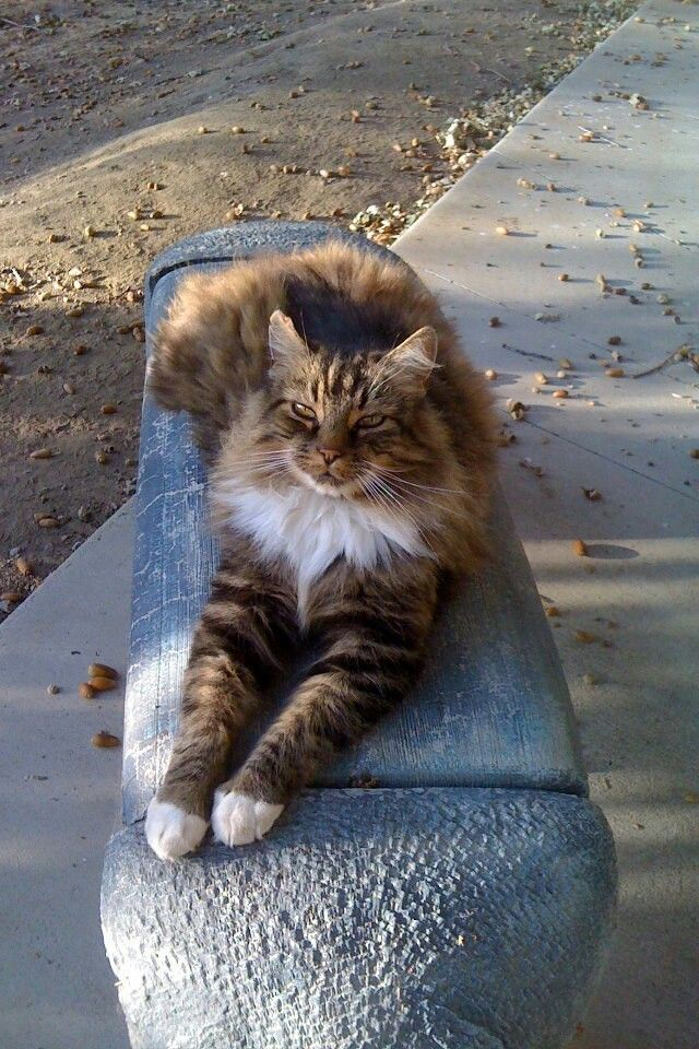 Miss my handsome boy Louie. Resting peacefully up in kitty heaven after an awesome 18 years with us. Love you handsome boy <3