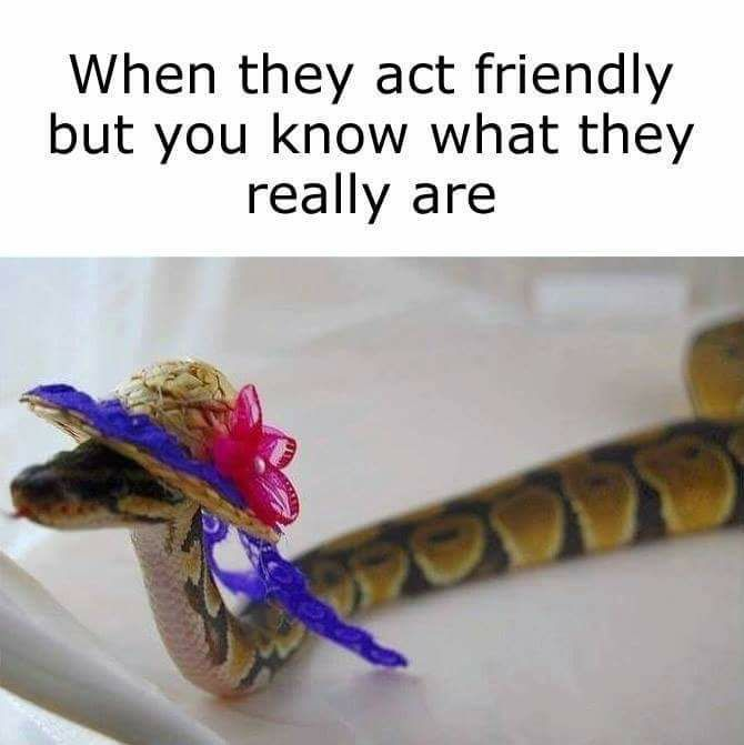Pin By Jennifer Russell On Mattness Snake Quotes Fake Friend Quotes Sarcastic