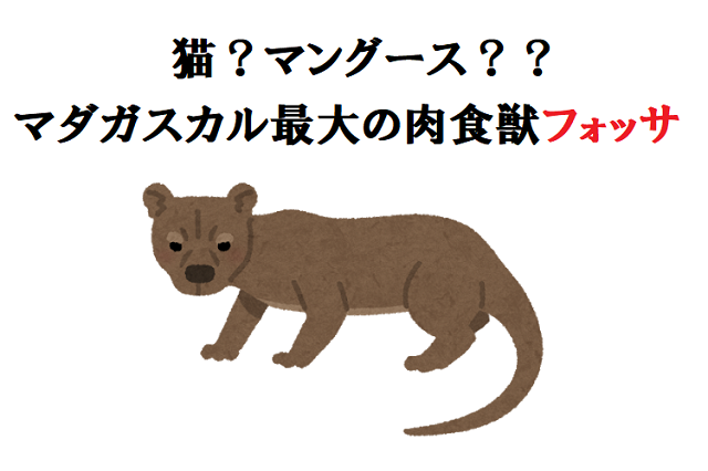 猫 それともマングース マダガスカル最大の肉食獣 フォッサ について調べてみた Fundo 猫 フォッサ 肉食