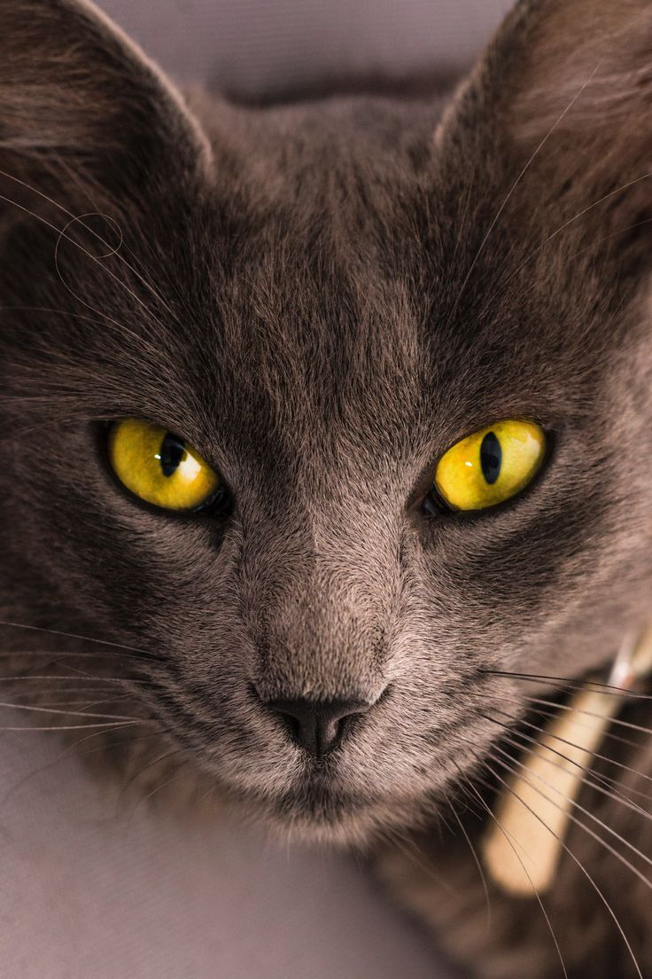 7 Tips For New Cat Owners Kittens Cutest Cats Beautiful Cats