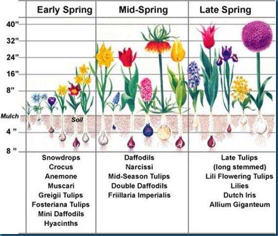 Planting Bulbs Guide Pflanzen Garten Bepflanzen Fruhlingsblumen