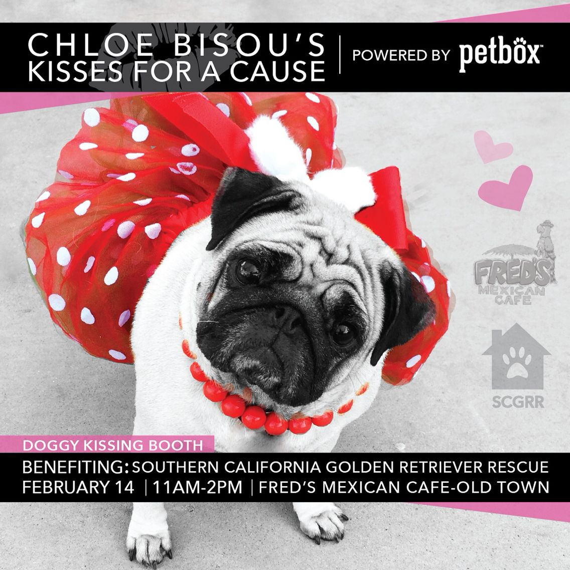 Chloe Bisou S Kisses For A Cause Powered By Petbox Dog Friends