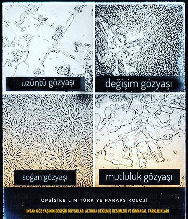 Türkiye Parapsikoloji (@psisikbilim) • Instagram fotoğrafları ve videoları #bilimdoğa