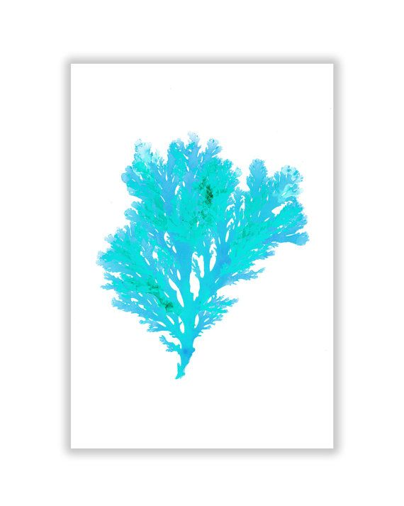 Large Beach Art Seaweed Print Vibrant Teal Blue by TheStrangeBird, $70.00