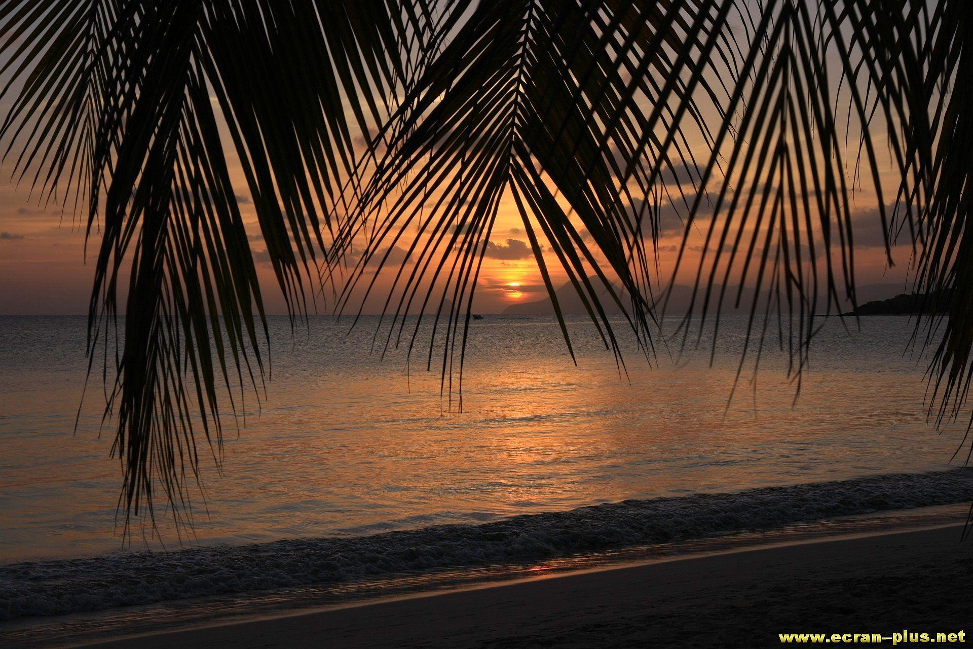 Coucher De Soleil Sur La Plage Des Salines Martinique Coucher De Soleil Plage Coucher De Soleil Destination Paradisiaque