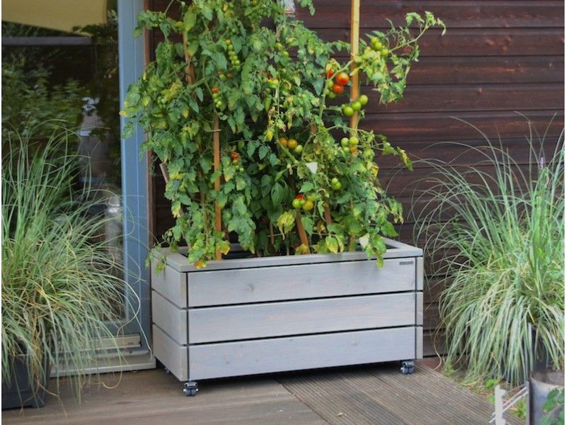 pflanzkasten f r tomaten gem sebeet aus holz inkl kunststoff pflanzeinsatz garten. Black Bedroom Furniture Sets. Home Design Ideas