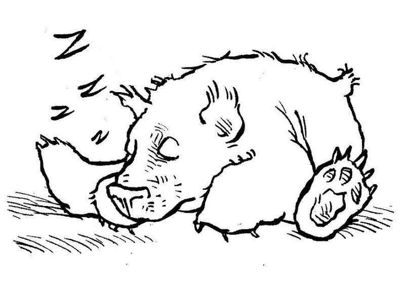 Koala Bear Coloring Pages For Kids From Bear Coloring Pages