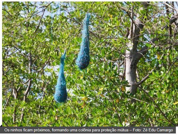 A natureza dando-nos uma lição de Reciclagem!!