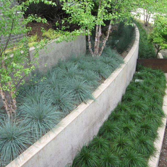 Ornamental Grass Terraces Color Texture And Low Maintenance