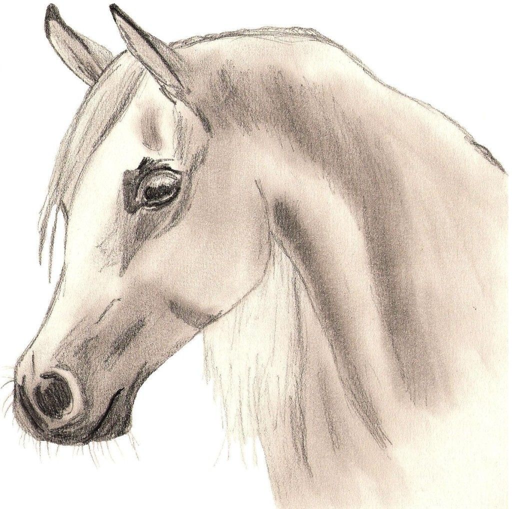 Nice Arabian Horse drawing Wallpaper Horse