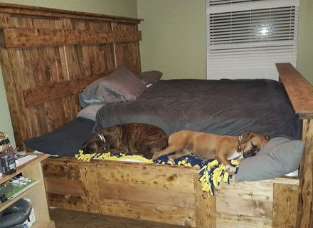 Bedroom King Size Bed With Dog Attached To
