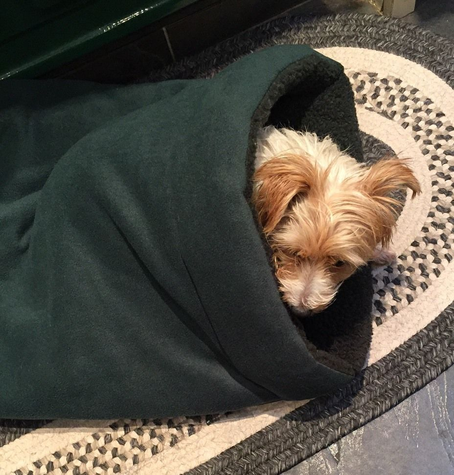 Pet Bed Snuggle Bag Terrier Tunnel for Dogs who burrow