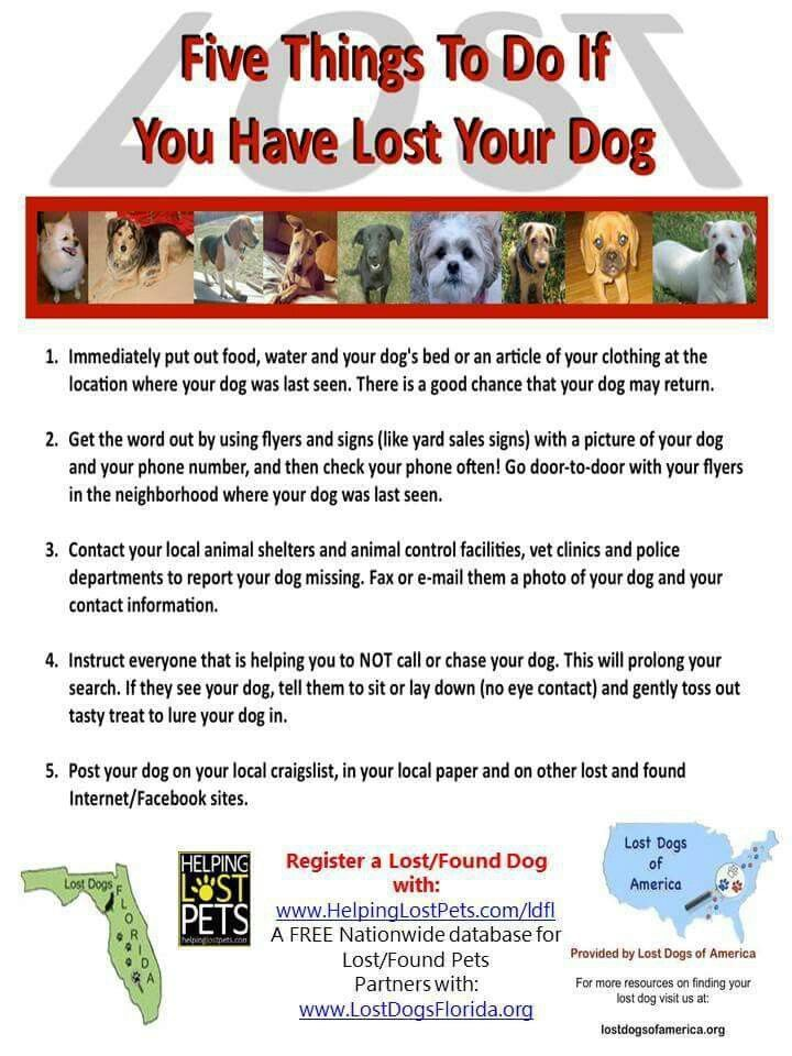 Tips to help you with your Lost Dog! Register on