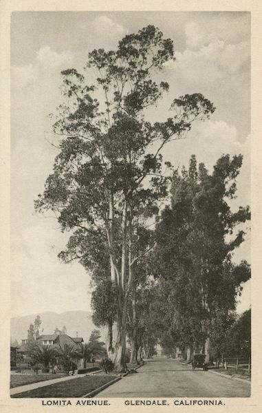 The Rise And Fall Of The Gum Tree Tree Essay California History Landscape