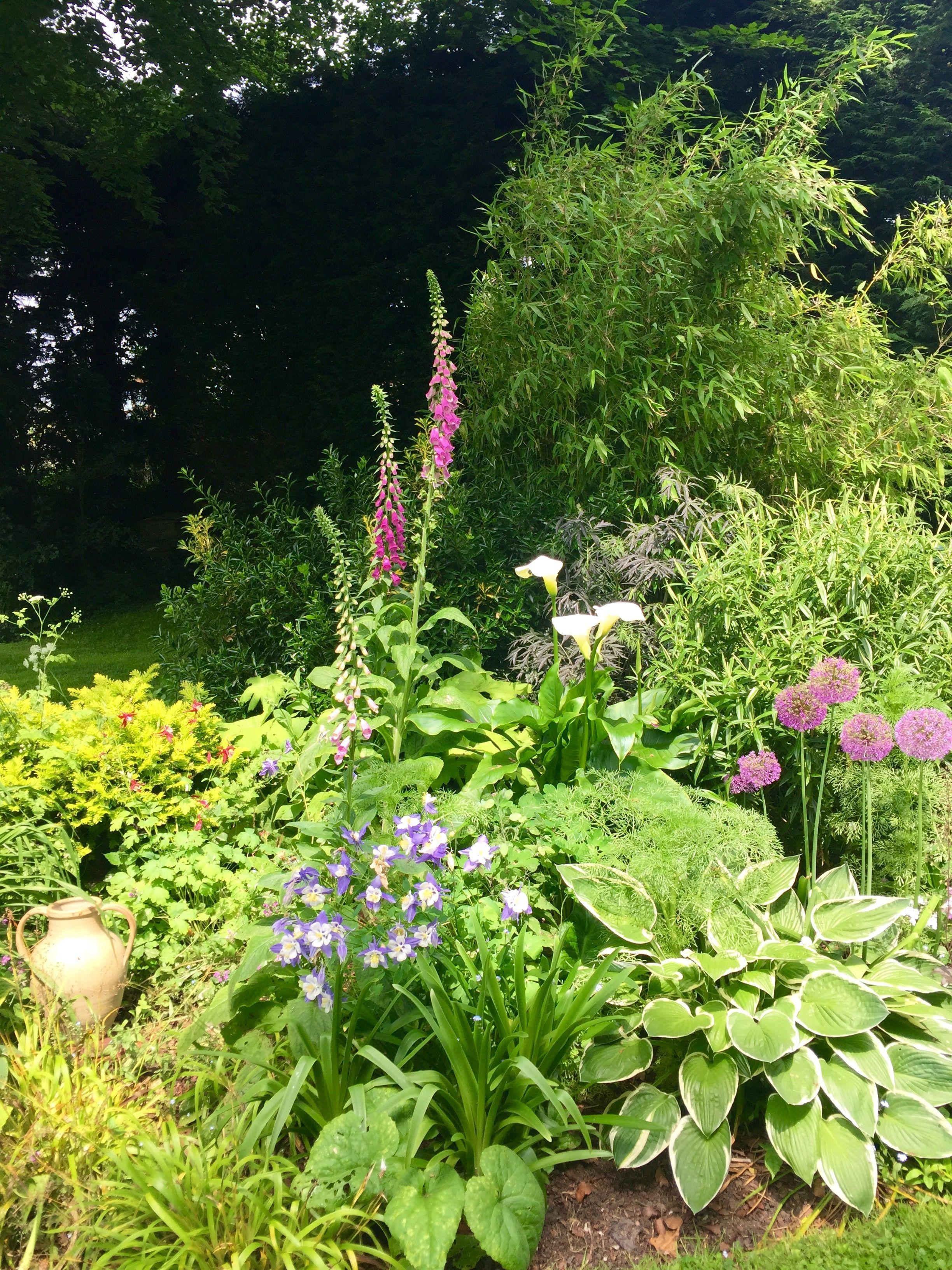pin by amanda osborne on garden border designs