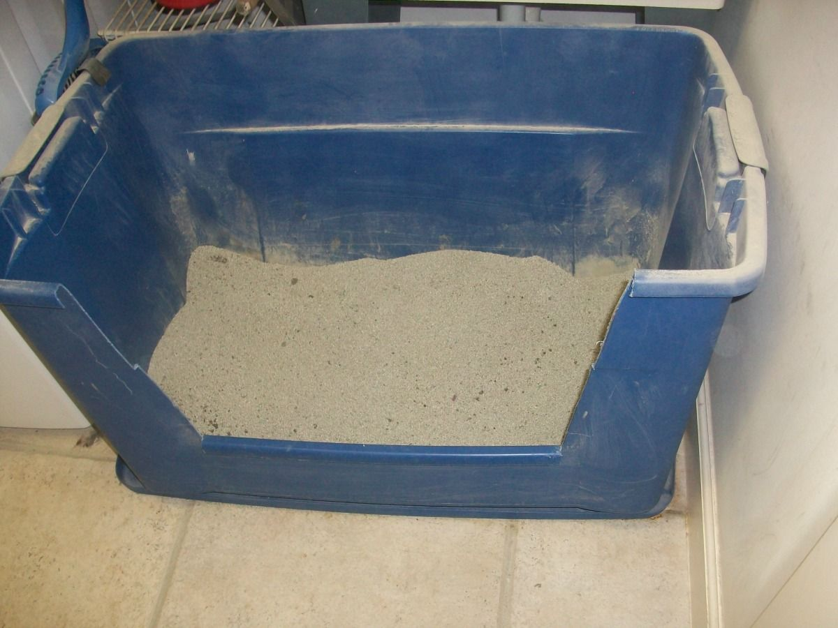 Ordinaire Image Result For Huge Sized Litter Box Giant Cat, Cat Litter Boxes, Unusual  News