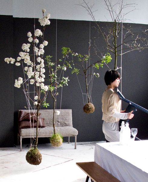 String gardens fliegende g rten lilli green magazin for Besondere topfpflanzen