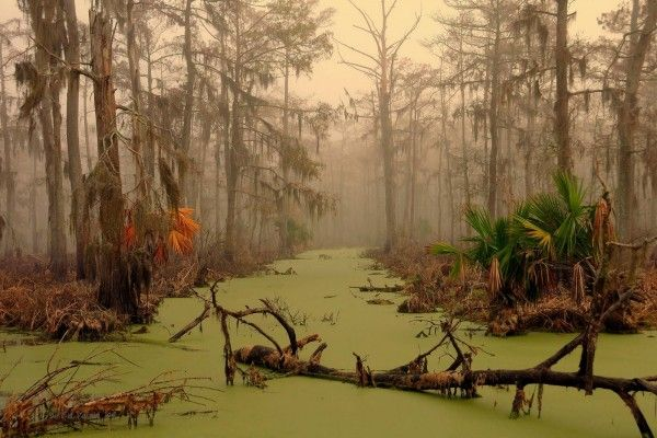 Manchac Swamp, New Orleans