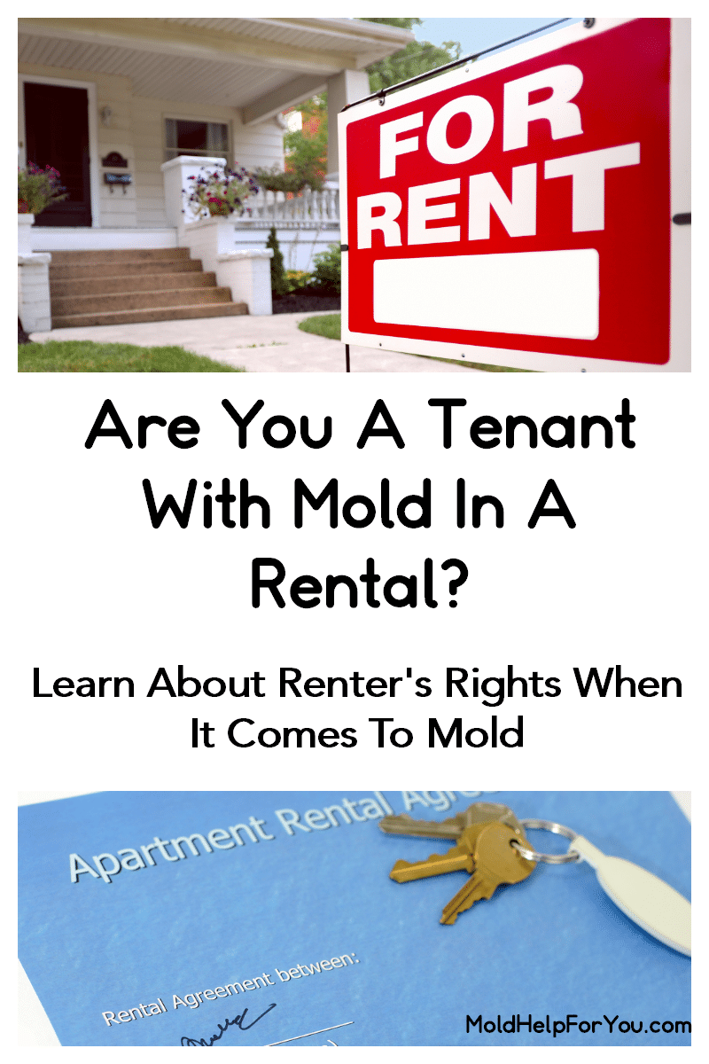 Are You A Tenant With Mold In A Rental This Article From Mold Help For You Outlines Renter S Rights When It Comes To M Being A Landlord Molding Things To Come