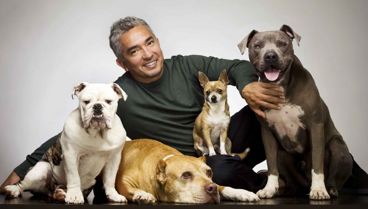 cesar's dog daddy Daddy, Cesar Millan Dog whisperer