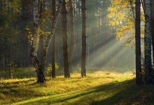 claro en el bosque