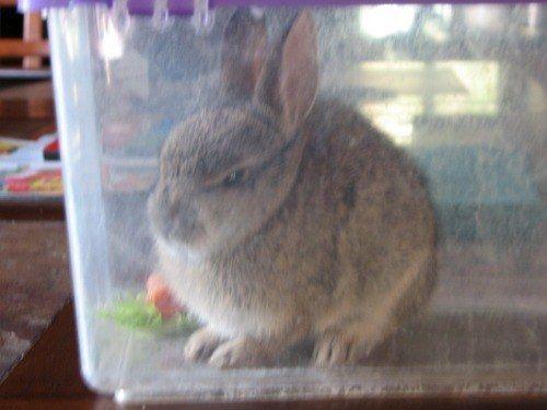 Off rabbit pissed 170 Pissed